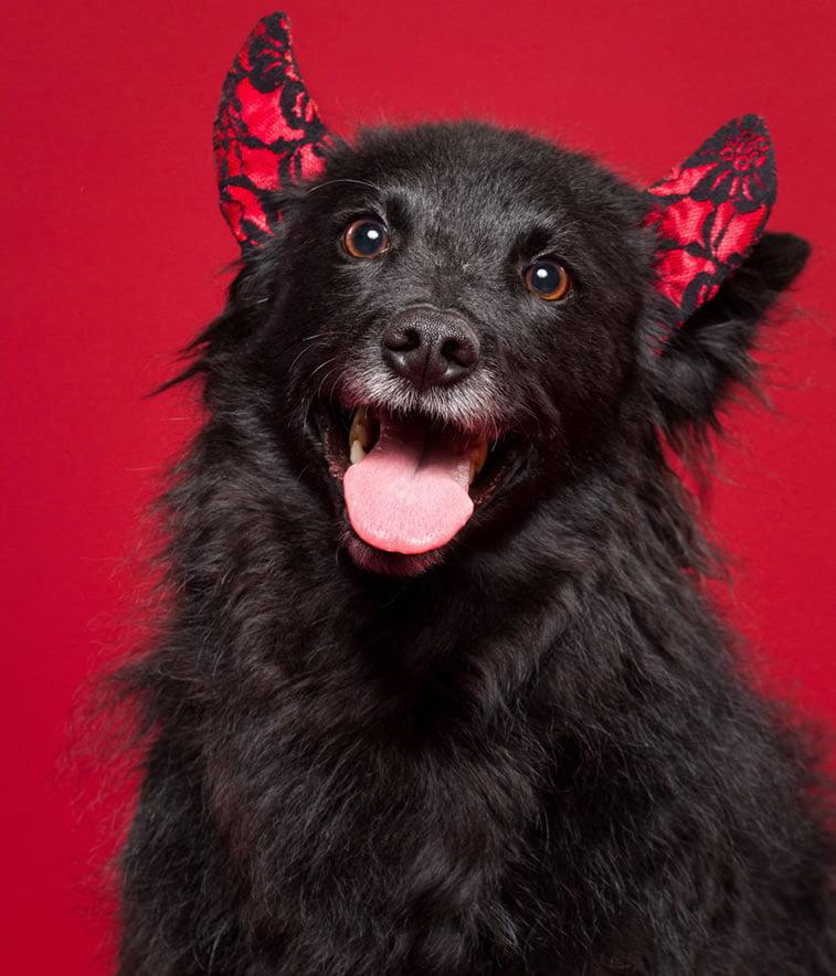xmas-dogs (9)
