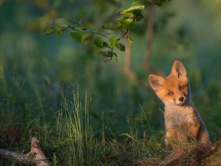 national-geographic-photo-of-the-day-internet-favorites-2015-40__880