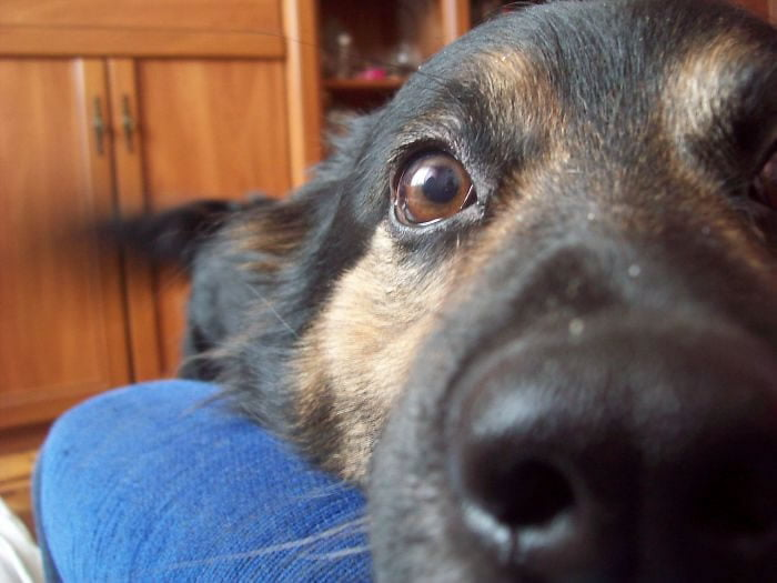 psi izbliza (1)