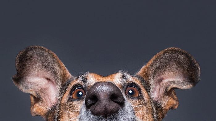 psi izbliza (16)