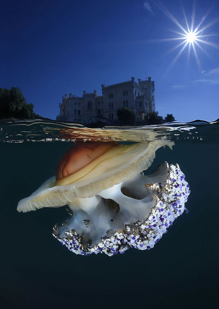 split underwater photos (10)