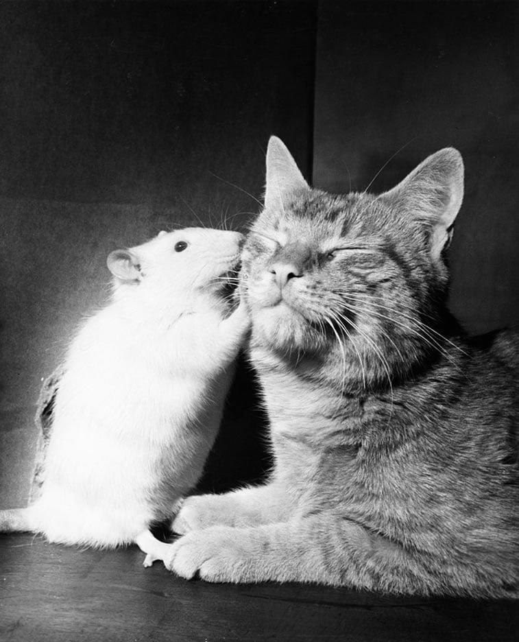 mačka i miš odrasli u prijateljstvu 1964.