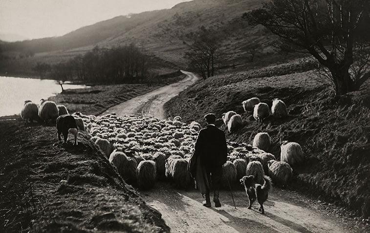 pastir sa kučetom i ovcama, Škotska 1919.