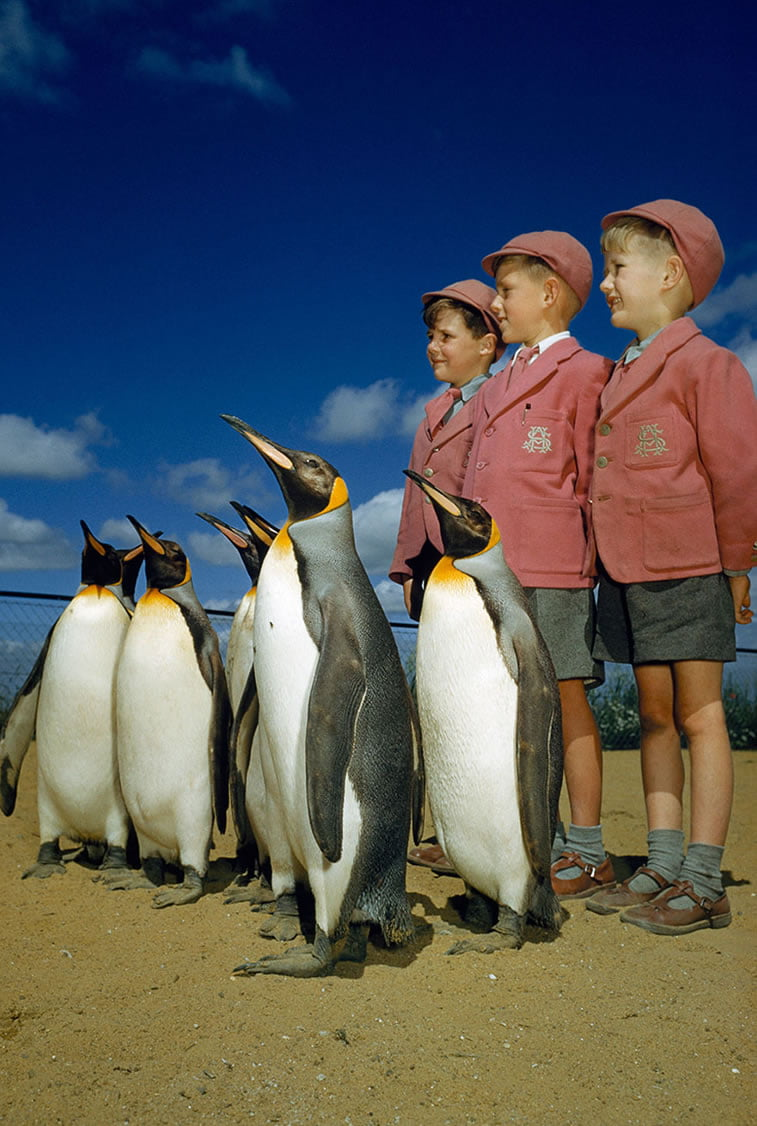 školarci u uniformama poziraju pored kraljevskih pingvina u Londonskom zoološkom vrtu 1935.