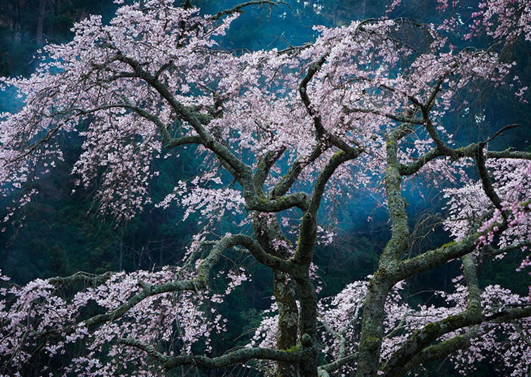 Oduševljenje, Japan