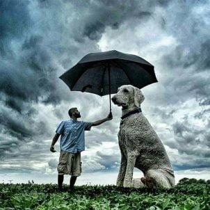 Fotograf koji je svog psa pretvorio u džina uz pomoć PhotoShop-a
