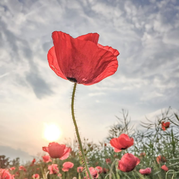 Lone Bjorn - Flowers