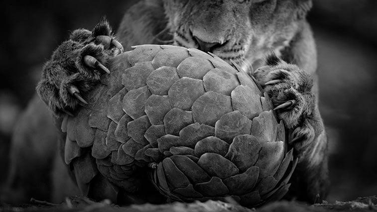Najbolje fotografije divljine 2016 - Prirodnjački muzej London 1