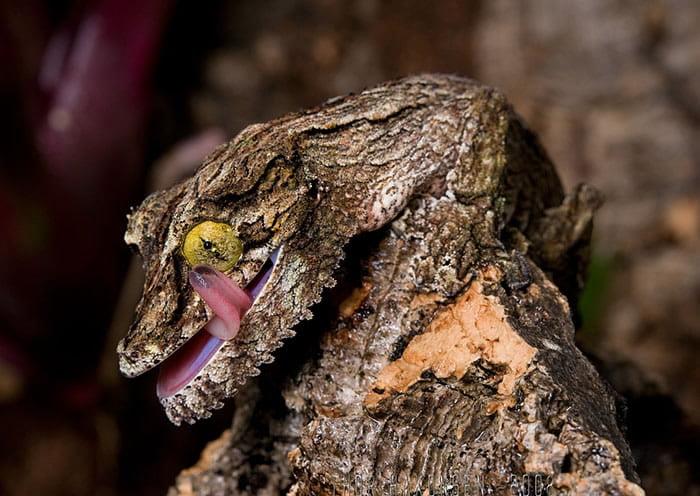 Neverovatni kameleoni životinjskog carstva 17