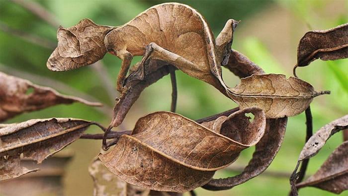 Neverovatni kameleoni životinjskog carstva 3