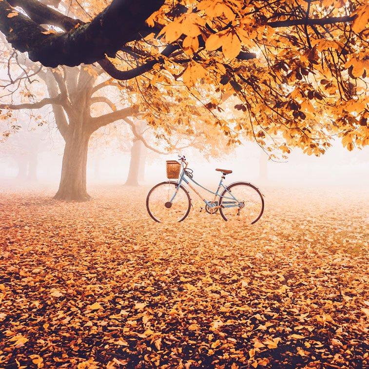Fotografije zlatne jeseni Kristine Makejeve 12