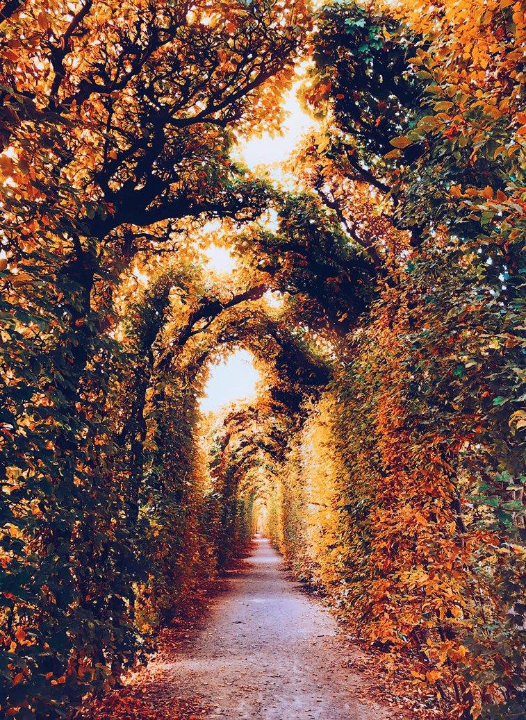 Fotografije zlatne jeseni Kristine Makejeve 2