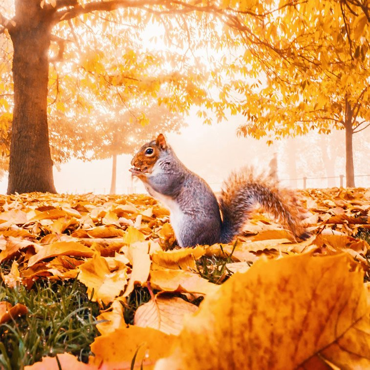 Fotografije zlatne jeseni Kristine Makejeve 8