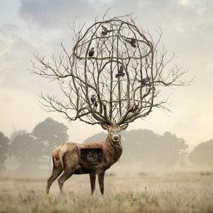 Foto-manipulacije Andrea Soze