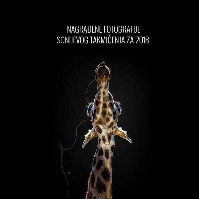 Nagrađene fotografije Sonijevog takmičenja za 2018. godinu