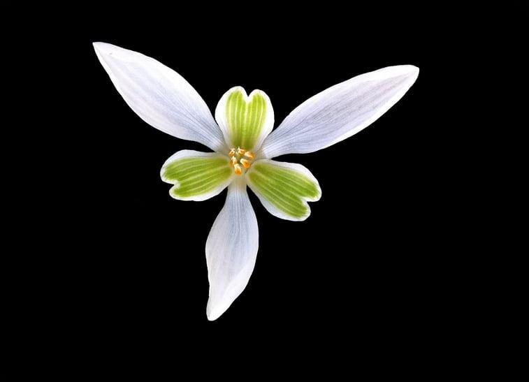 cvet pozadine za desktop Pexels Pixabay