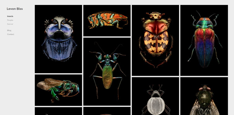Levon Biss insects