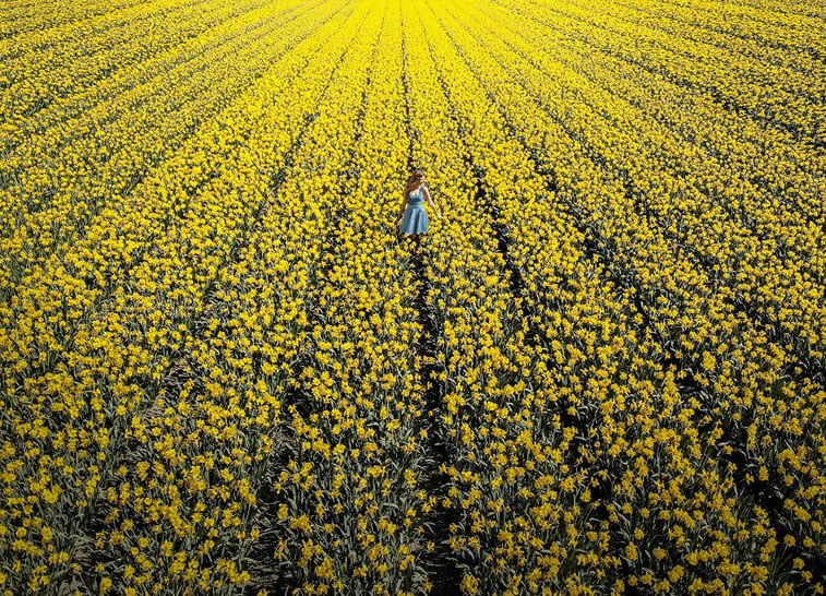 blooming fields of the netherlands 17 chanel in yellow tulip garden