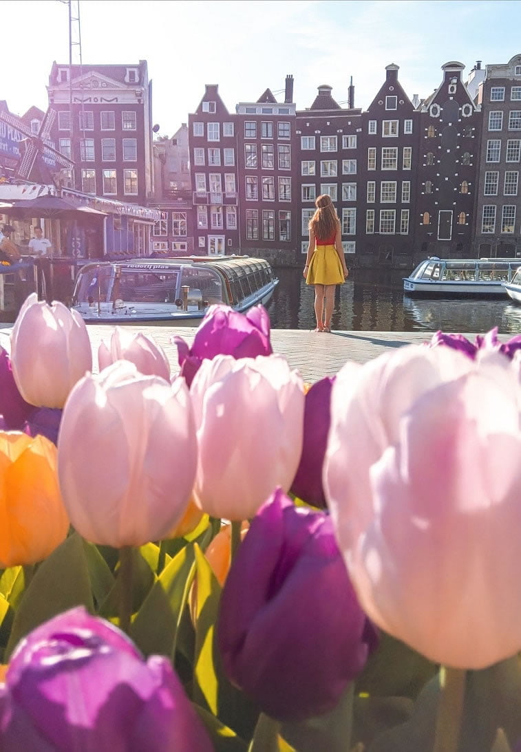 blooming fields of the netherlands 19 1 punk tulips in amsterdam