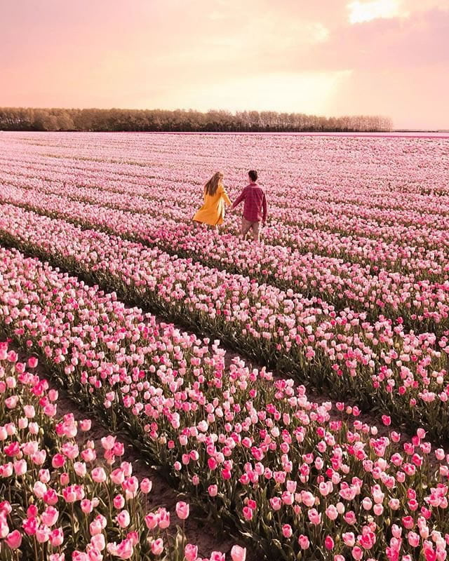 blooming fields of the netherlands 20 1 stevo and chanel