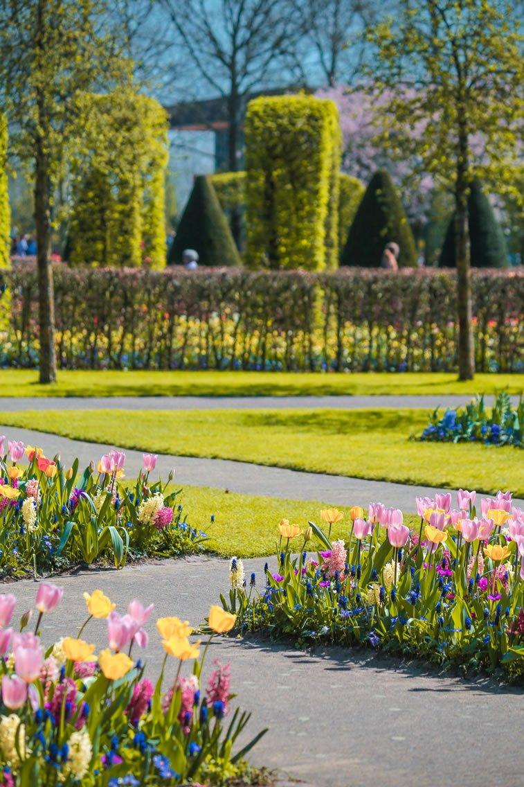 blooming fields of the netherlands 25 1 rotterdam tulips