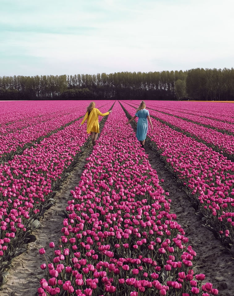 blooming fields of the netherlands 6 two girls