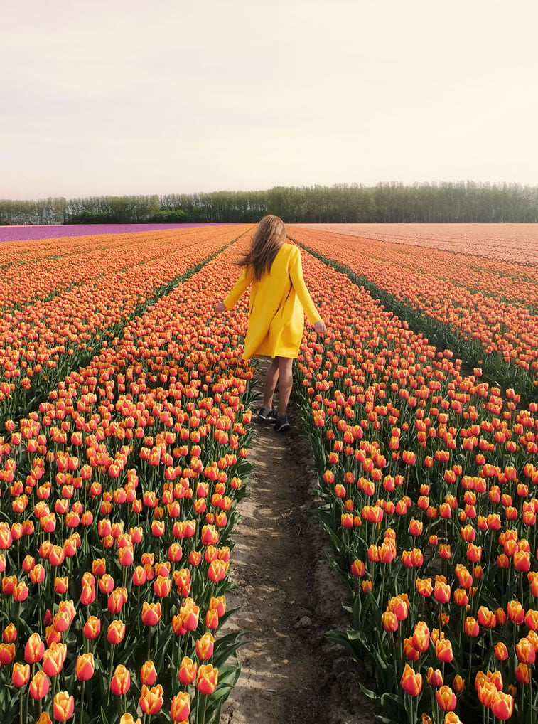 blooming fields of the netherlands 8 far from home