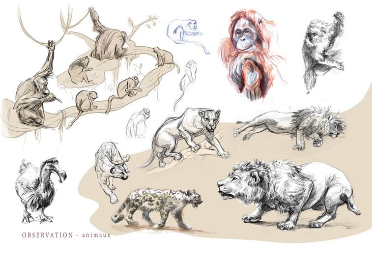 zivotinje skice lav tigar majmun