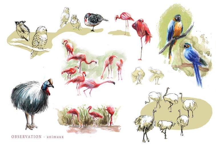 ptice skice sova flamingosi papagaj noj