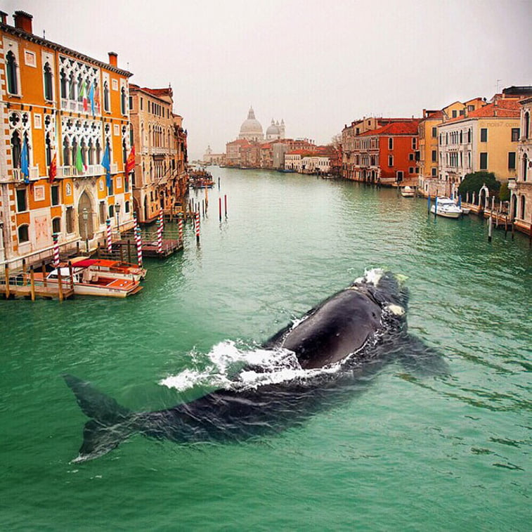 venezia whale in canal photo manipulation