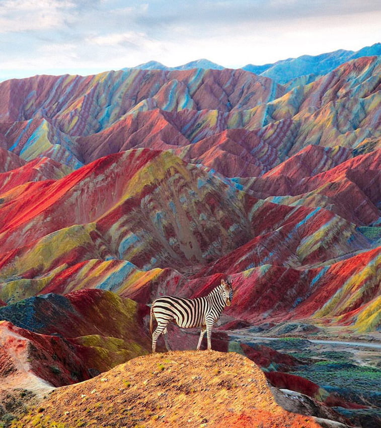 zebra colorful mountains photo manipulation