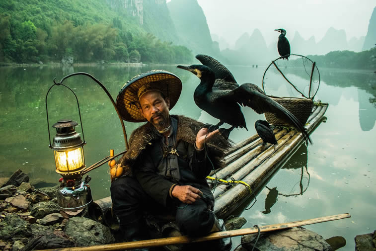 blackbeard cormorant fishermen guilin china