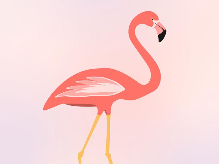 flamingo ilustarcija living coral boja godine
