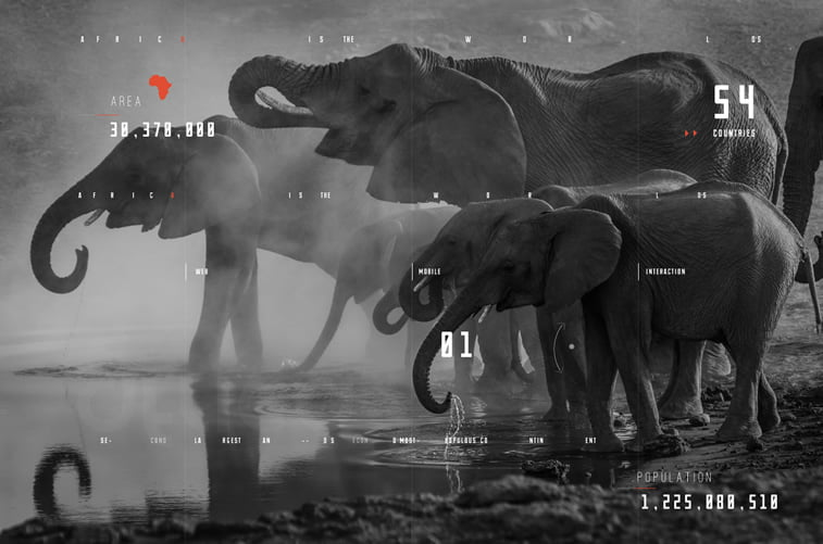 Africa website Concept Design elephants