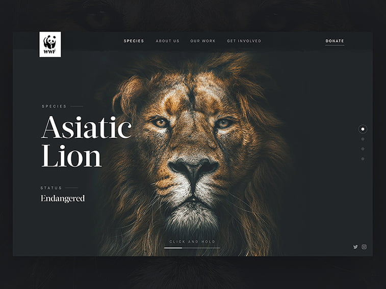 WWF Header Concept lion hero image