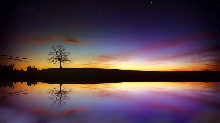 drvo zalazak sunca desktop pozadina