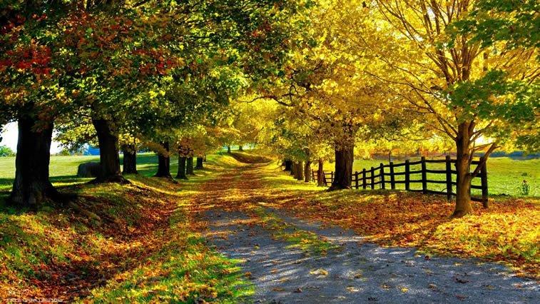 jesen priroda setaliste desktop slika