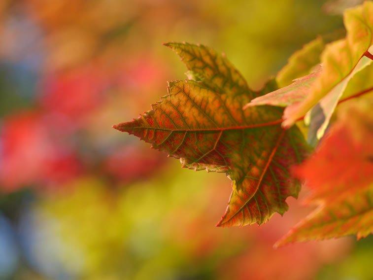 jesenji list jesen boje pozadina za desktop