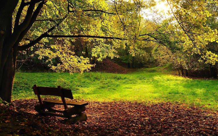 klupa u parku jesenje boje fotografija desktop