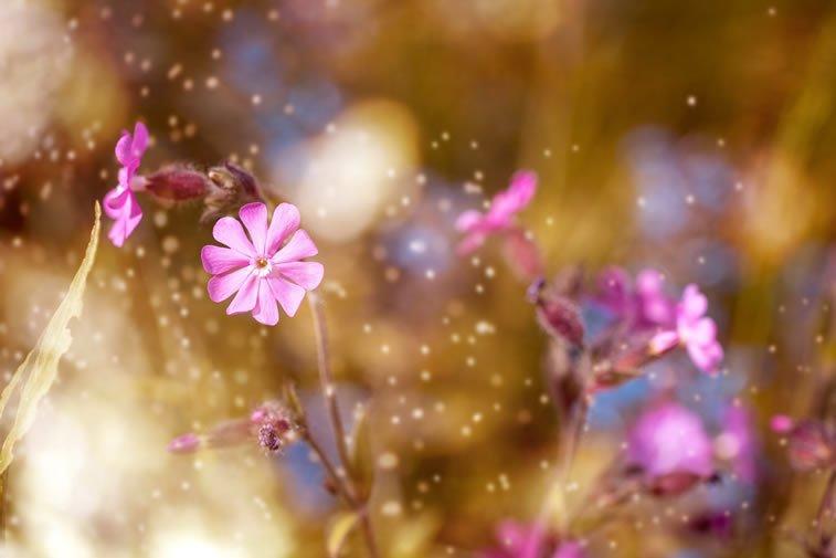 ljubicasti cvet makro snimak desktop pozadina