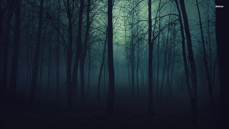 magla u sumi desktop pozadina
