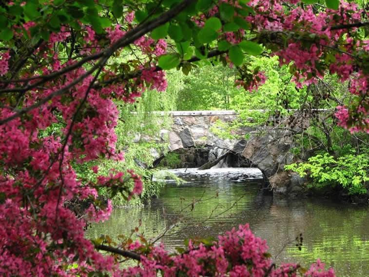 kameni most reka drvece cvece desktop pozadina