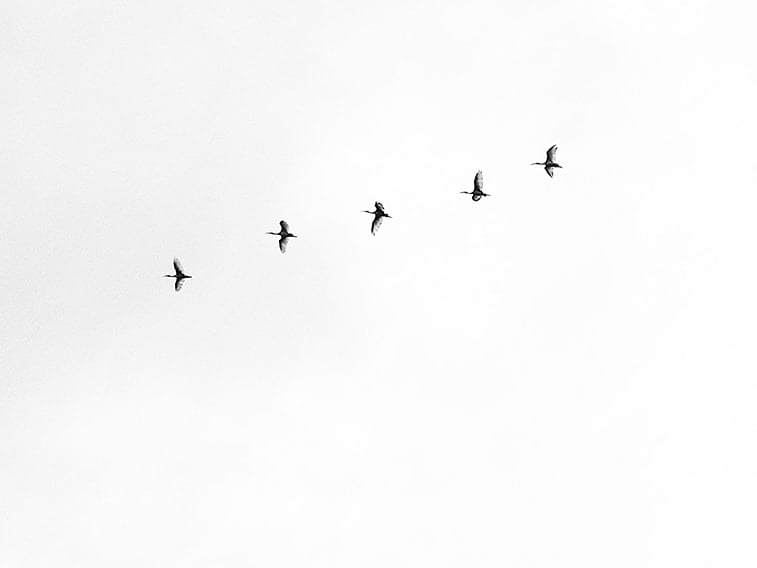wallpaper desktop minimalism birds flying