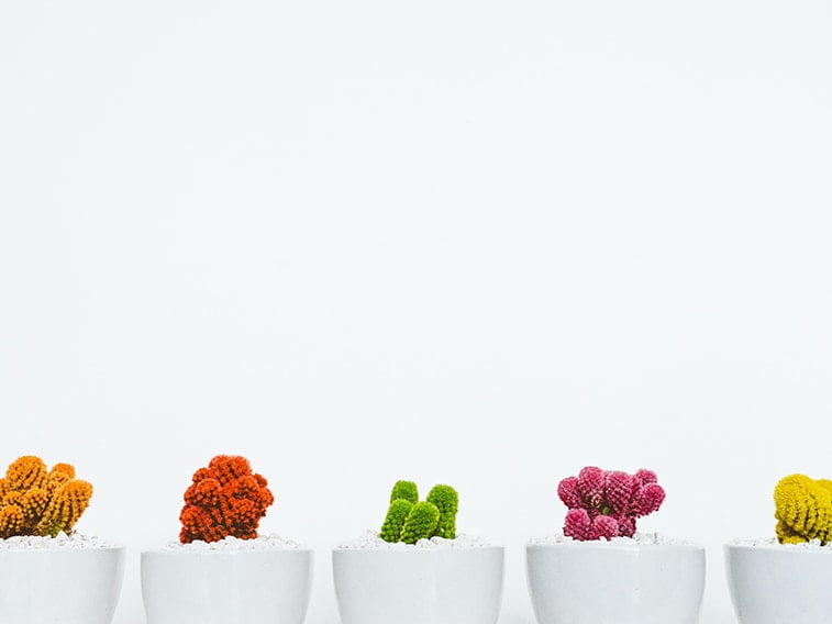 wallpaper desktop minimalism cacti