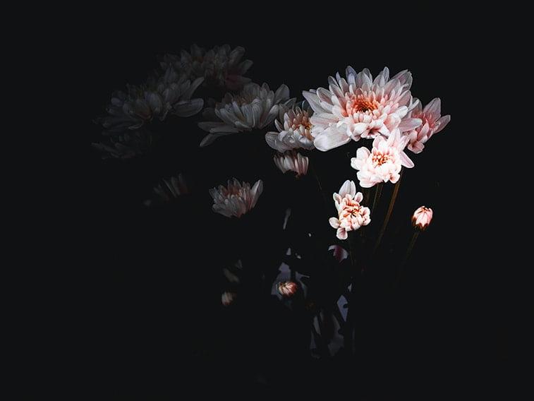 wallpaper desktop minimalism pink flower
