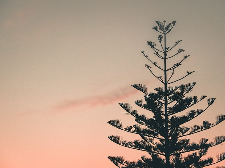 wallpaper desktop minimalism sunset tree